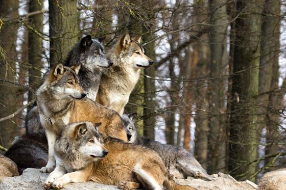 kartinki-volkov-13