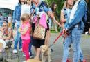 Бездомные животные Кобринщины нуждаются в вашей помощи!