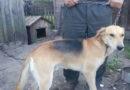 В лесном массиве на охоте в районе д. Хабовичи пропала собака