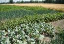 Что значит иметь собственный огород?