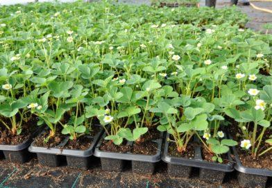 О реализации продукциицветоводства, декоративных растений, их семян и рассады