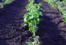 Осуществление деятельности физическими лицамипо вспашке огородов