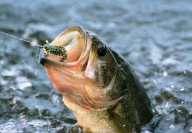 Кобринчан приглашают на соревнования для любителей рыбалки и охоты
